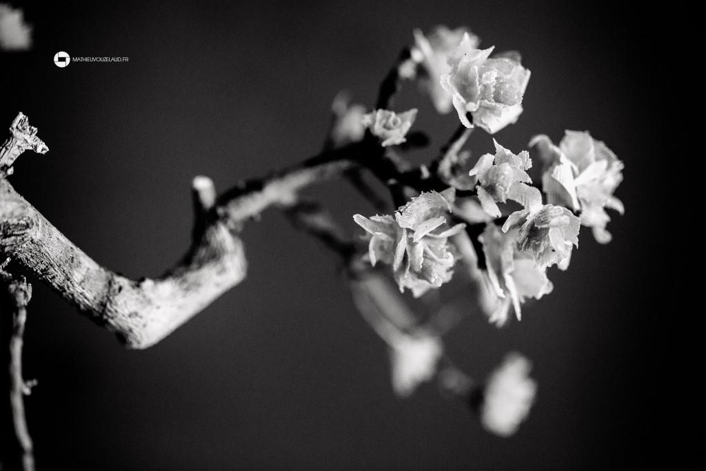 fleur bonsaï