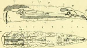 L'art des larves